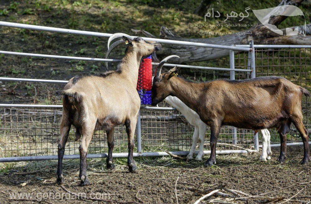قشو ثابت بز کربل (KERBL Scratch Brush for Goat)