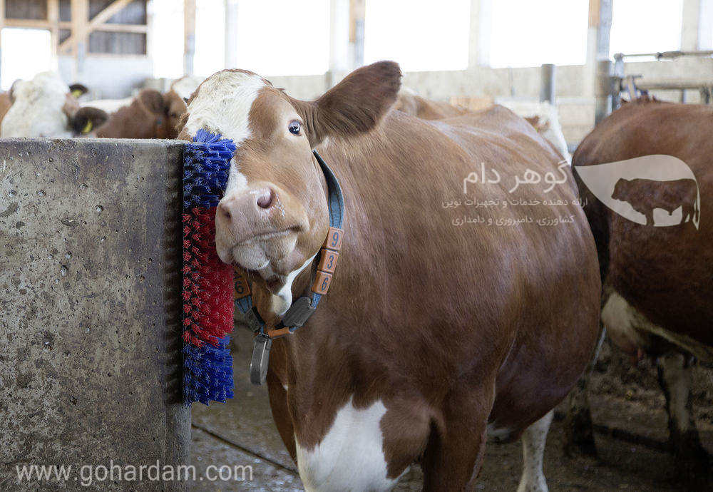 قشو ثابت گاو کربل (KERBL Scratch Brush fo Cow)